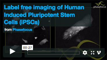 Label-free Imaging of Human Induced Pluripotent Stem Cells (iPSCs)
